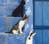 """купить: Набор для творчества Набір-стандарт, картина за номерами """"Кошенята на схо"""