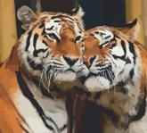 """купити: Набір для творчості Набір-стандарт, картина за номерами """"Закохані тигри"""""""