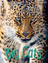 купити: Книга 100 Facts Big Cats